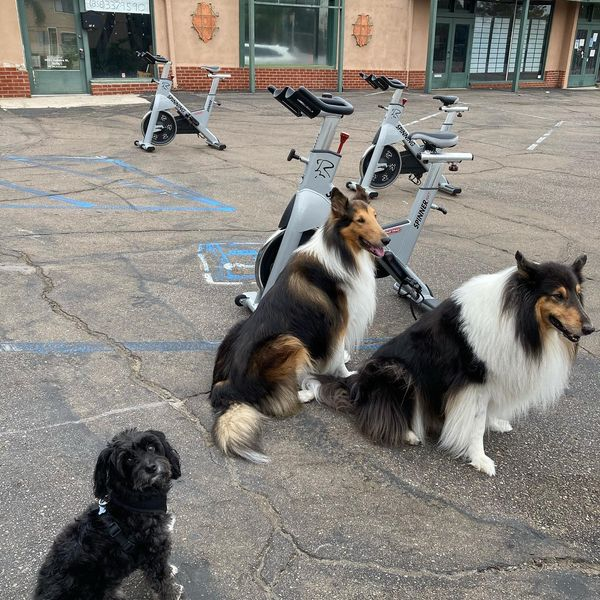 Bring Your Dog To Exercise at LisaFit!